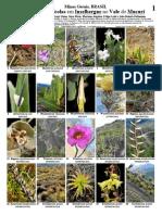 de Paula et al. 2012. Plantas saxicolas Vale do Mucuri.pdf