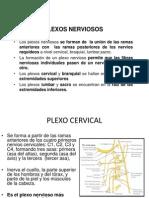 Plexos Trabjo.pptx Nuevo (1)