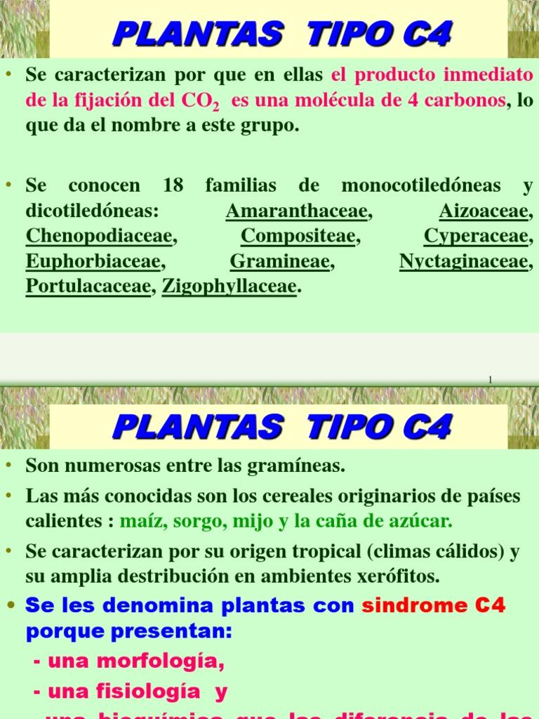 Fotosintesis c4 y Cam