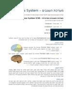 מערכת העצבים - 2008-12-15 - מרים