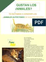 _ANIMALES AUTOCTONOS