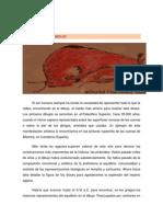 Historia Del Dibujo (Introducción)