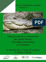 Caiman Crocodilus Crocodilus