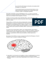 Areas Broca y Wernicke.