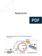 Respiracion_transp2
