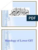 Histology of Lower GIT