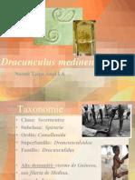 Dracunculusmedinensis2