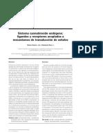 Sistema Cannabinoide Endogeno