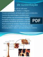 Tecido de Sustentação-ossos -Organizado
