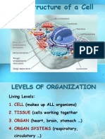 1. Struktur Sel