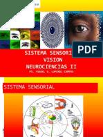 6. Sistema Sensorial Vista