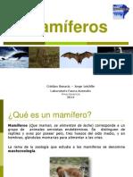 Mamiferos 2014