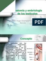 Anatomía y Embriología de Los Testiculos (1)
