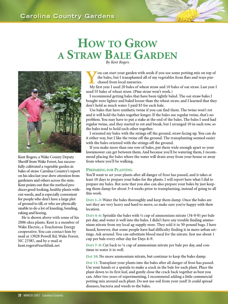 How To Grow A Straw Bale Garden | Tomato | Horticulture And Gardening
