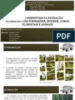 Extração Florestal SEMINÁRIO