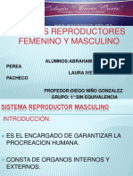 Aparato Reproductor Masculino Power