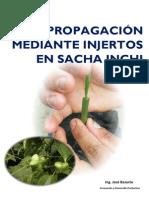 Protocolo Para Sacha Inchi, Propagacion Injerto