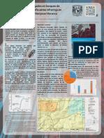 Teledeteccion Sanidad Forestal