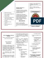 Triptico Proceso Del Pcu 02.01.2013