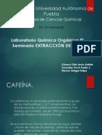 Extraccion CAFEÍNA