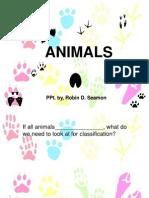 animaltoinvertebratenotes-110118145004-phpapp02