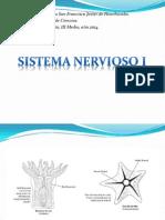 Diferentes Sistemas Nerviosos - Copia