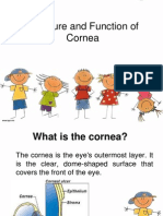 Structure of Cornea