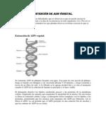 Obtención de ADN