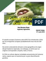 05. Castaño