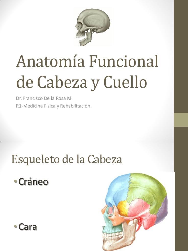 Anatomía Funcional y Descriptiva de Cabeza y Cuello