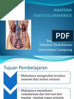 ANATOMI TRAKTUS URINARIUS