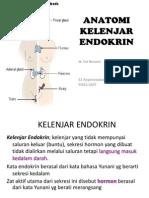 Anatomi Kelenjar Endokrin Newn