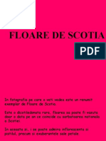 Floarea de Scotia...