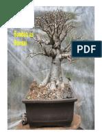 Baoba as Bonsai