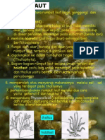 Morfologi Rumput Laut