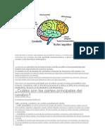 Antes de Iniciar El Artículo Cabe Destacar Que El Sistema Nervioso y El Cerebro Que Forma Parte de Él Son Estructuras Muy Complejas