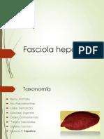 Fasciola Hepatica y Paragonimus