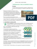 Tema7.Sedimentos y Rocas Sedimentarias