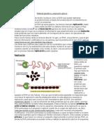 Transcripcion Material Genético y Expresión Génica