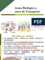 7 MEMBRANA BIOLOGICA