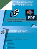 Sistema Nervioso Core 2009ii