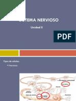 Sistema Nervioso Letizumo