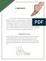 Coloc.anató.pies