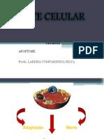 mortecelular-120424114133-phpapp02