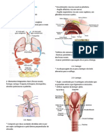 Sistema Respiratório (1)