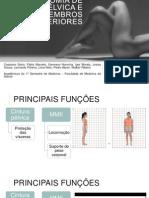 Anatomia de Cintura Pélvica e Membros Inferiores