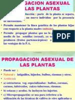PROPAGACION ASEX