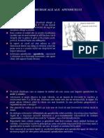 Boli Chirurgicale Ale Apendicelui1 (2)