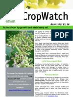 Adelaide Hills Crop Watch 271109