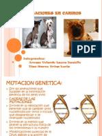 Mutaciones en Caninos